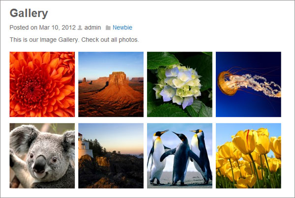 image gallery wordpress